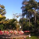 Les flamands roses