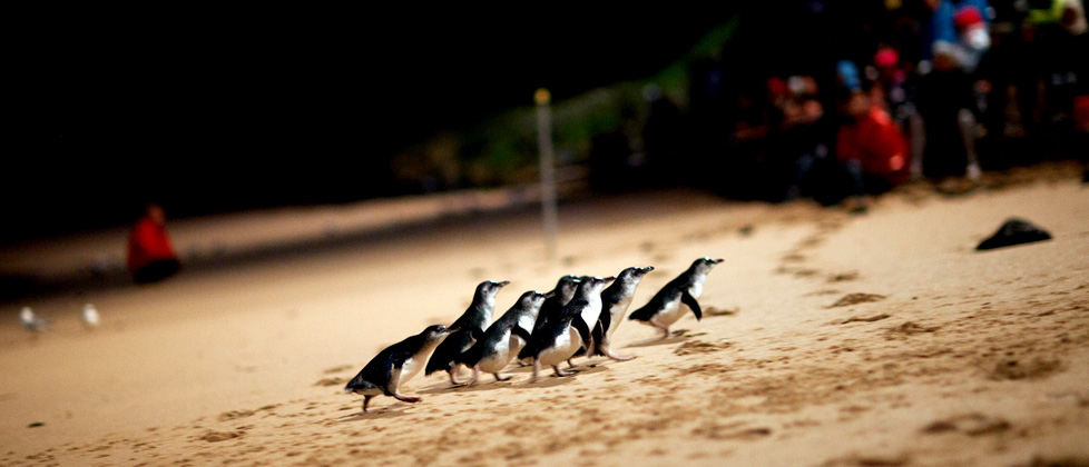 attractions-penguins