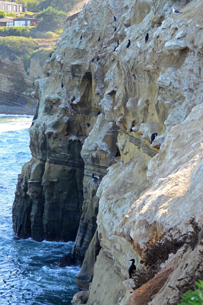 Oiseaux sur la falaise à La Jolla