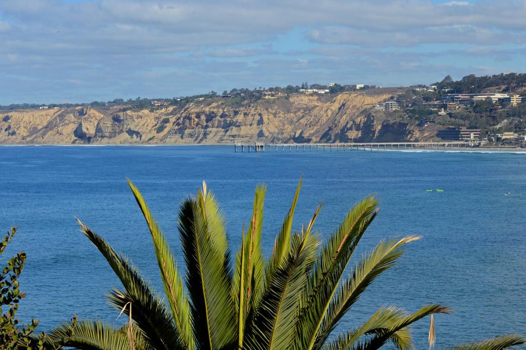 Palmier et falaises depuis La Jolla