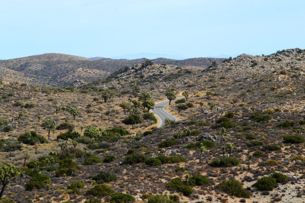 route dans Joshua Tree National Park