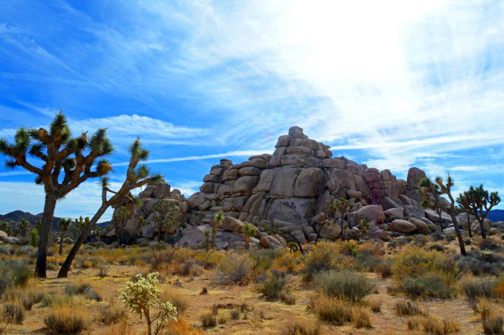 rochers et arbres à cape rock