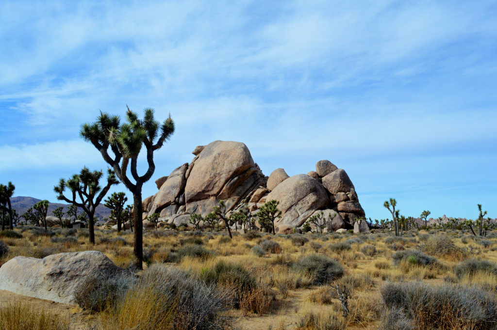 joshua tree cape rock