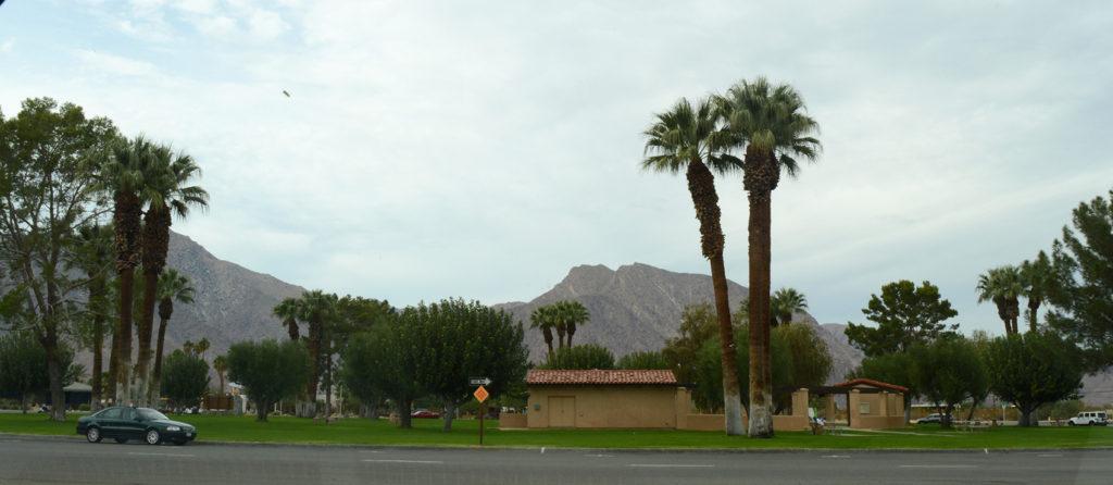 Palmiers à Borrego Springs