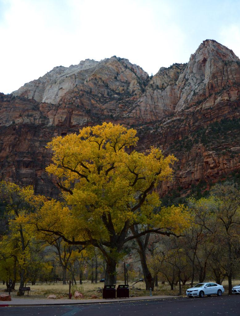 grand arbre jaune devant les montagnes