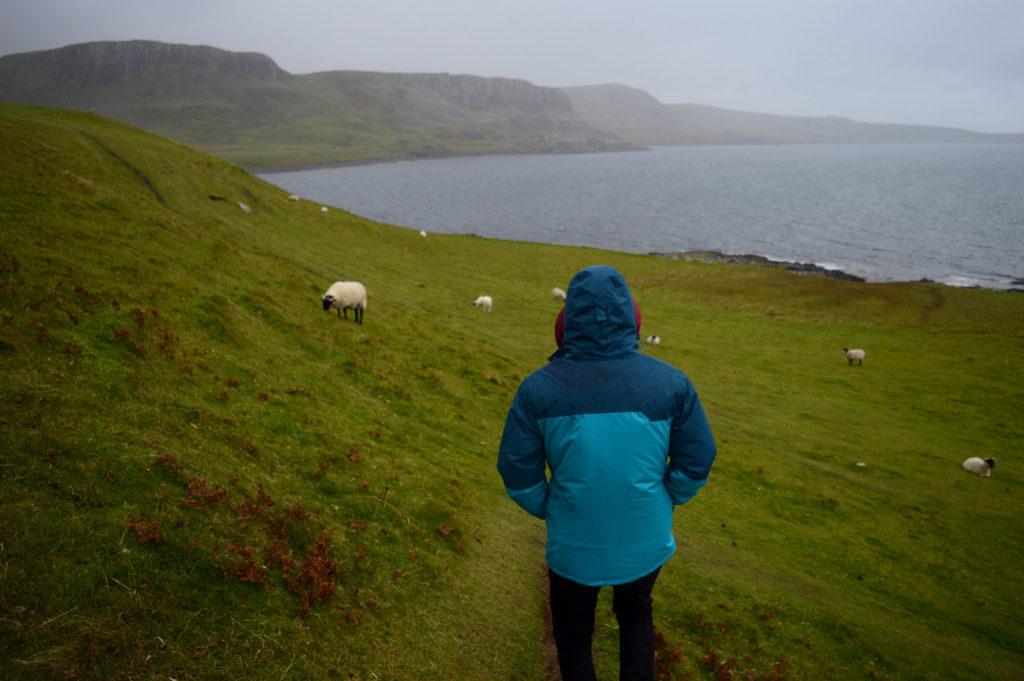 Manu sous la pluie au milieu des moutons, près de la côte