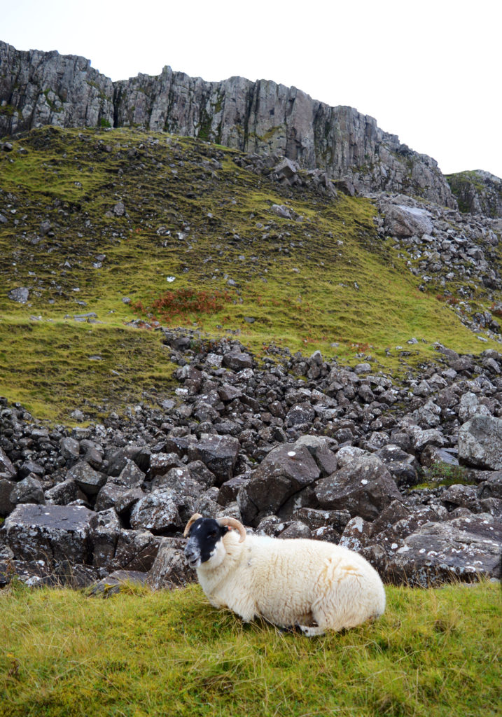 mouton devant un paysage de l'ile de skye