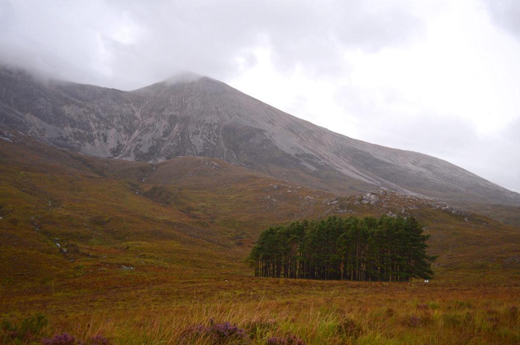 dans la réserve de Beinn Eighe, petite famille de sapins