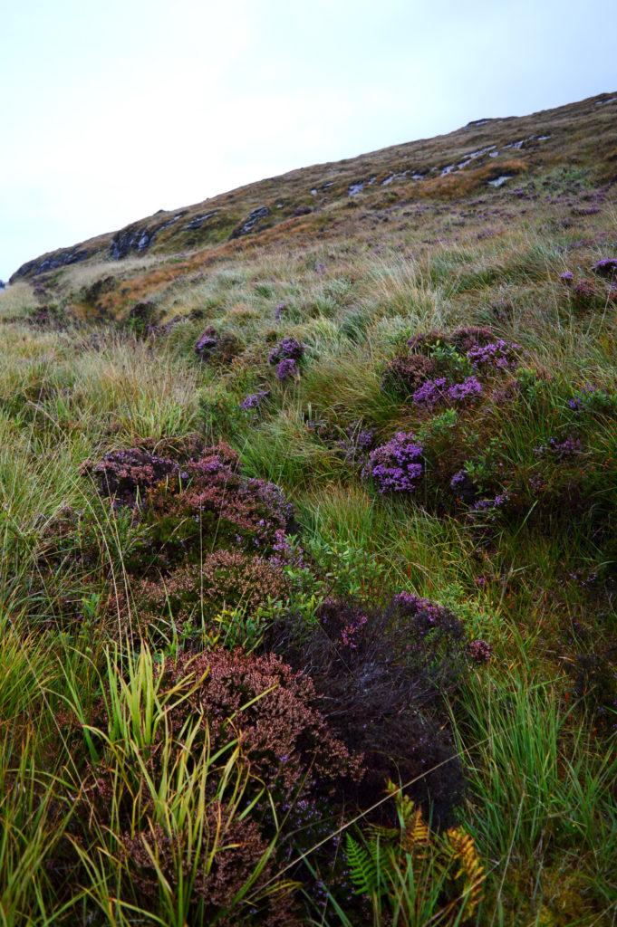 fleurs sauvages violettes