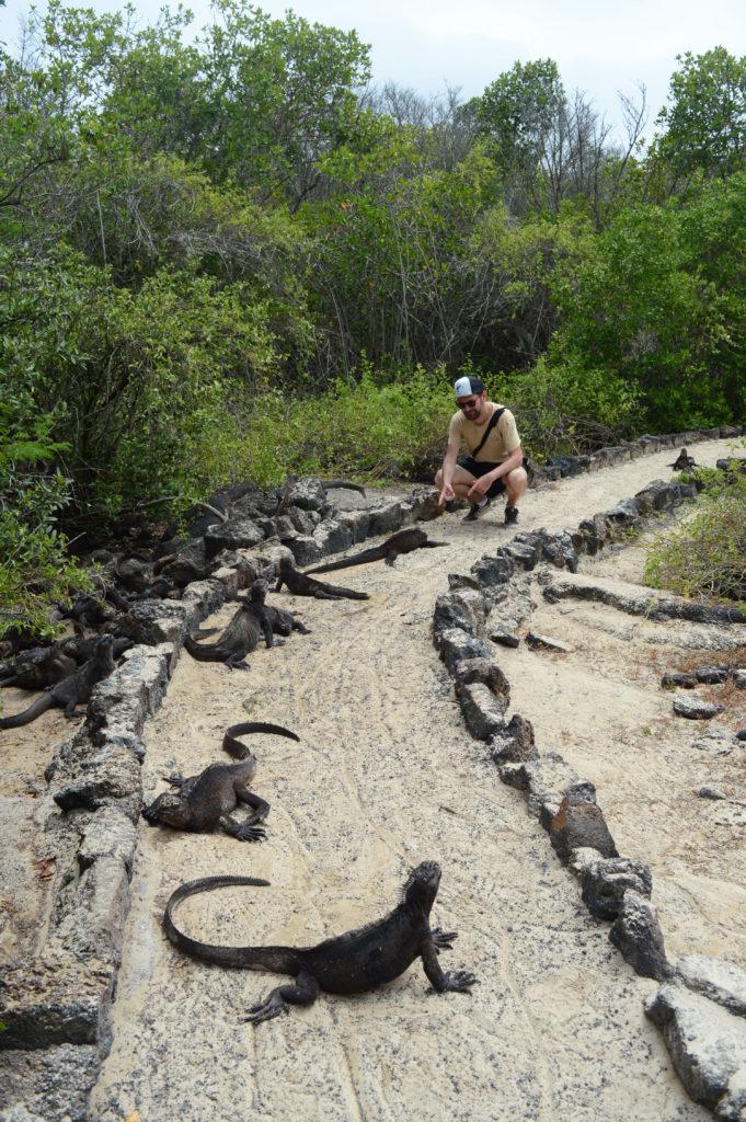 iguanes sur la route