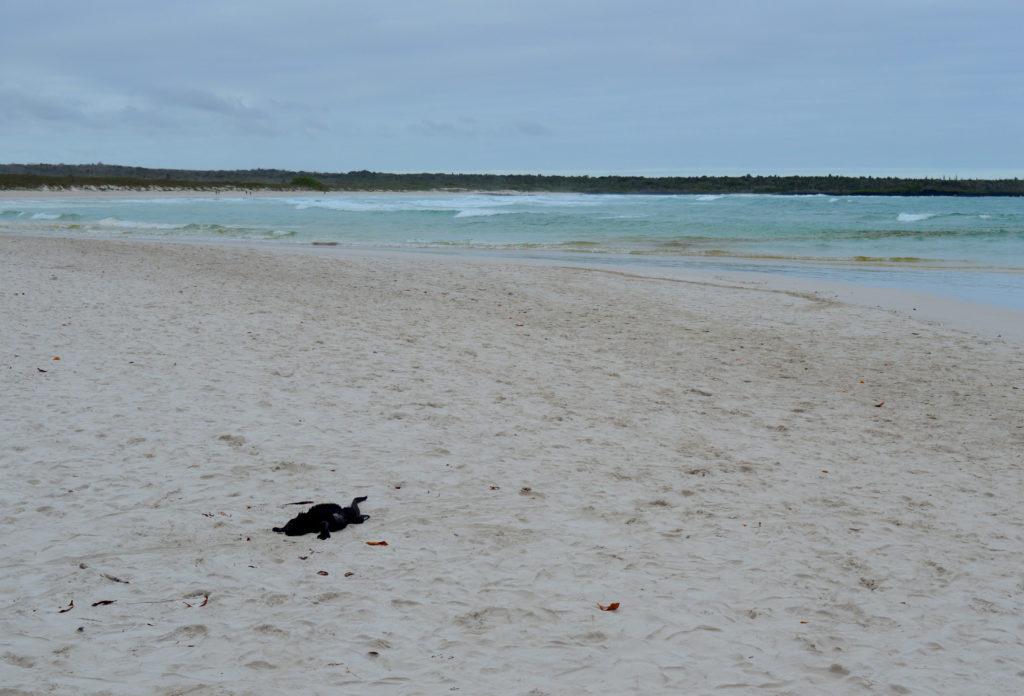 plage avec un iguane