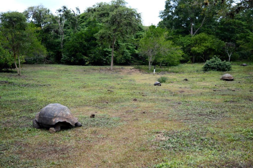 plein de tortue