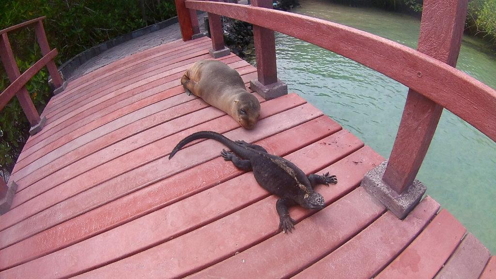 otarie et iguane