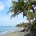 la piscina, plage et palmier des caraibes