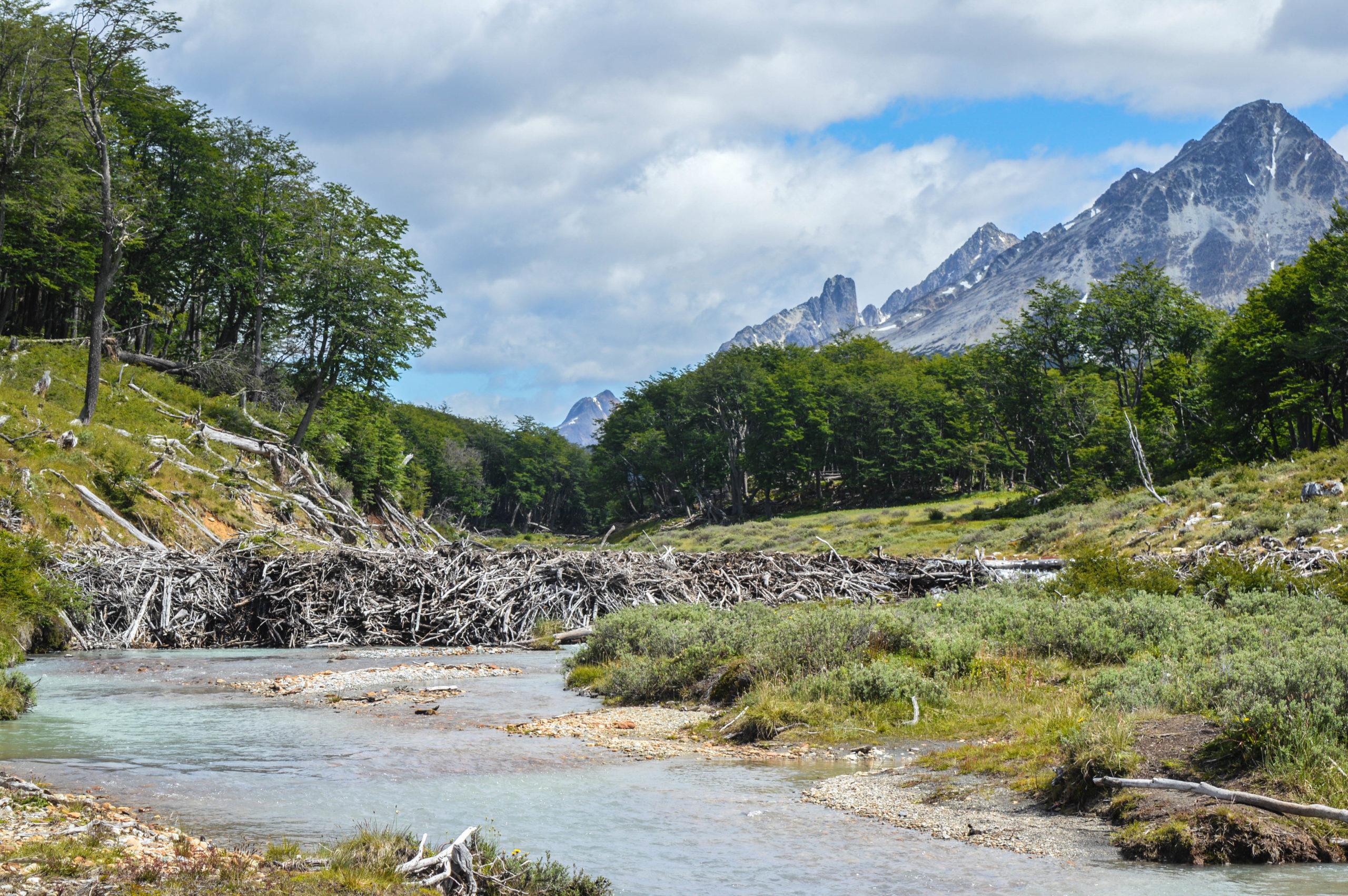 paysage, barrage de castor