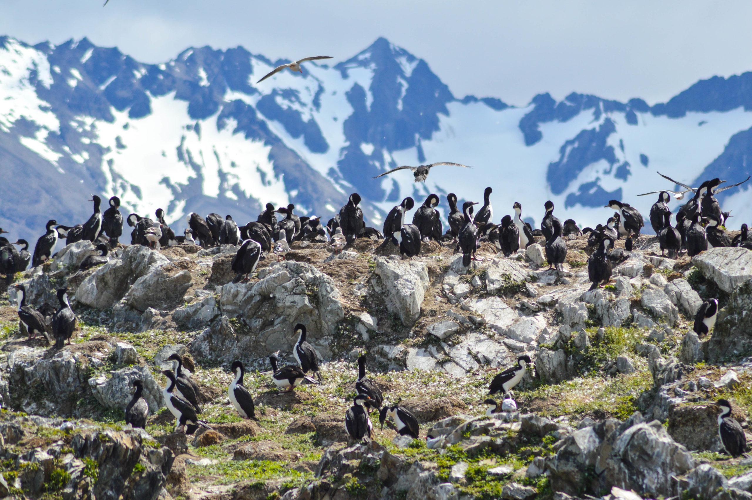 cormorans avec les montagnes