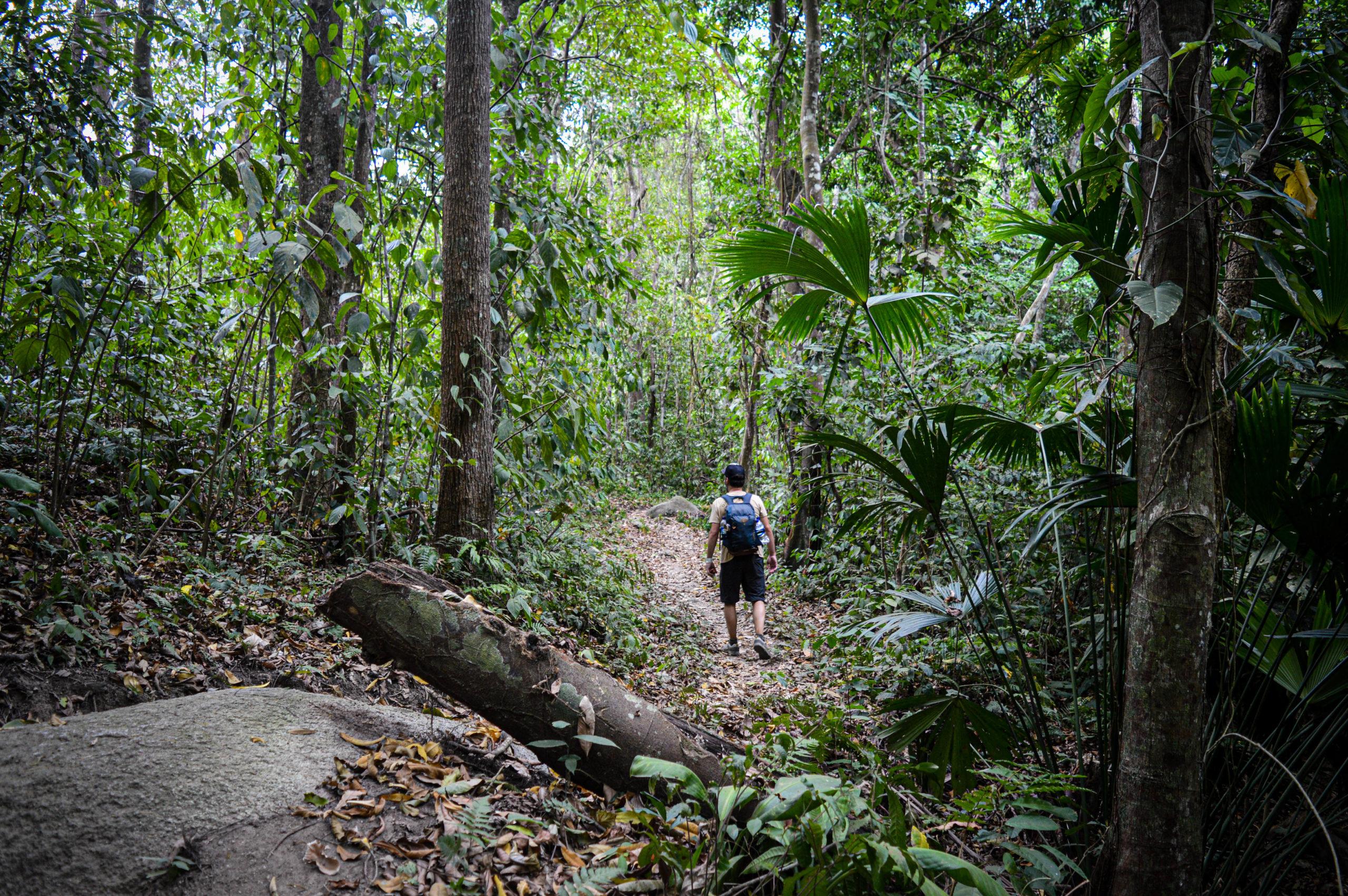 dans la forêt tropicale, parc tayrona