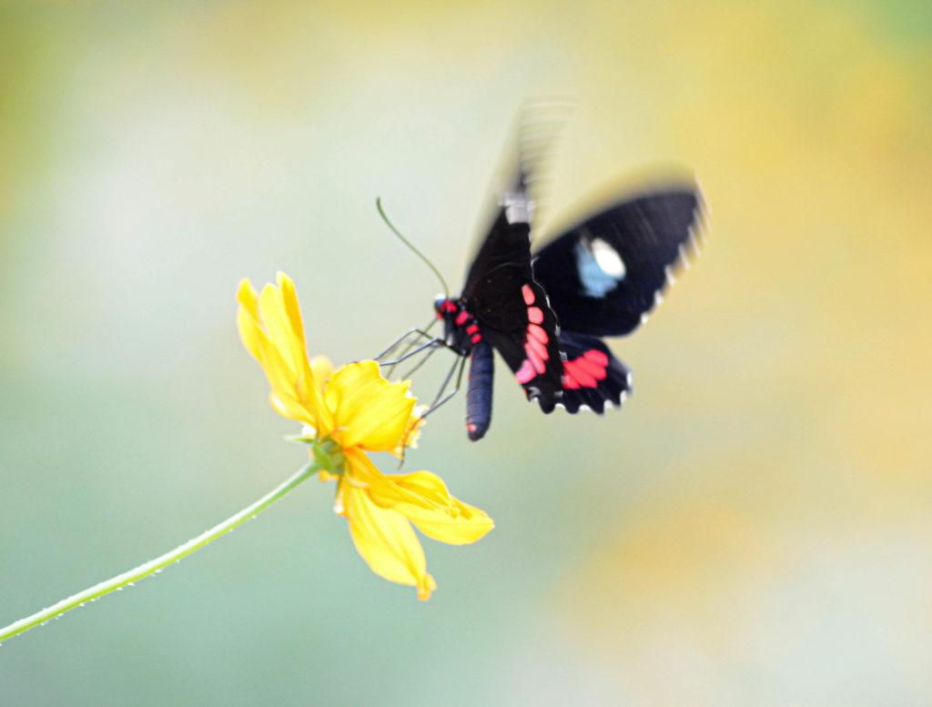 papillon, Aluxes Ecopark, palenque, chiapas