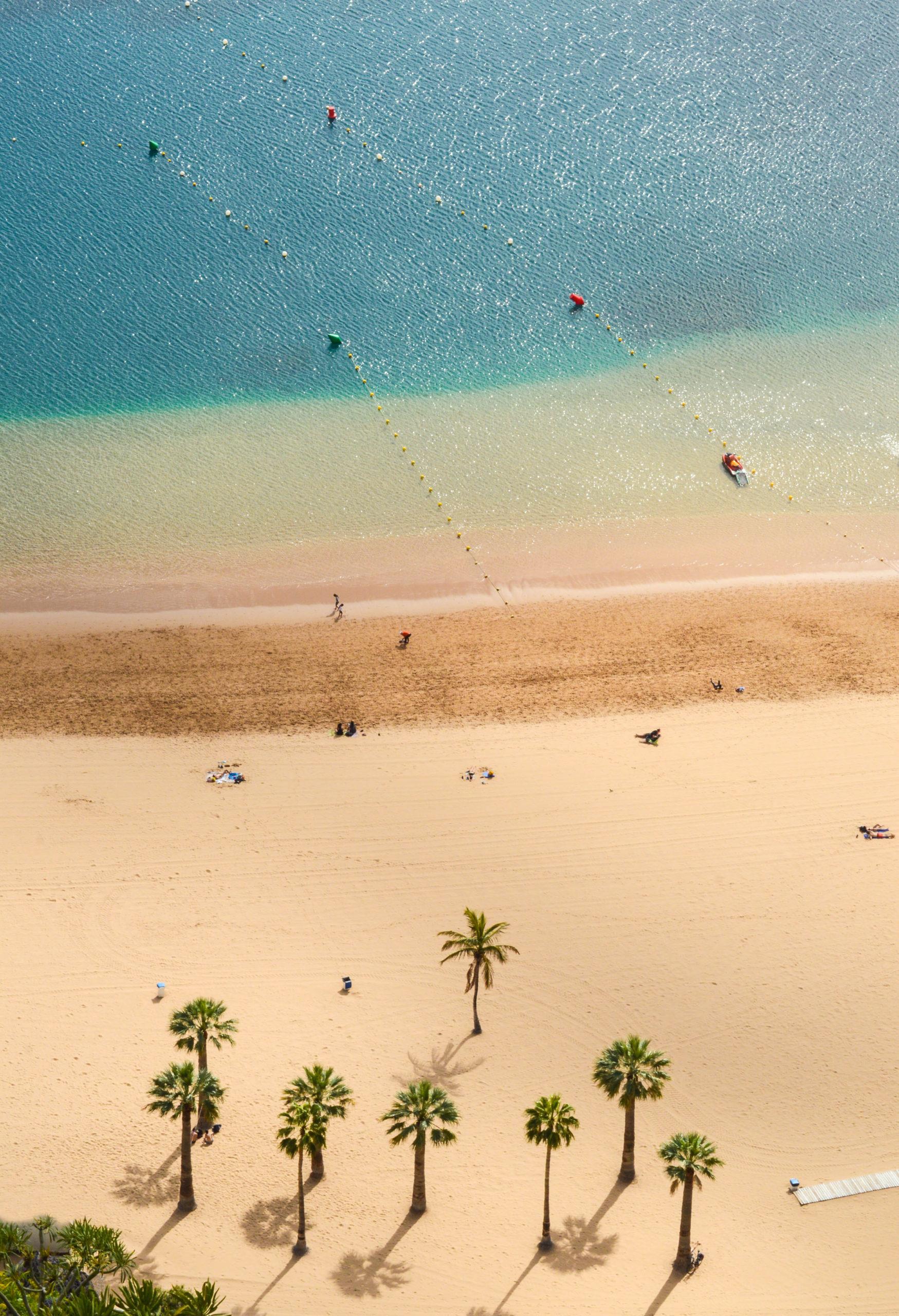 palmiers sur la plage de las teresitas, à tenerife, aux îles canaries